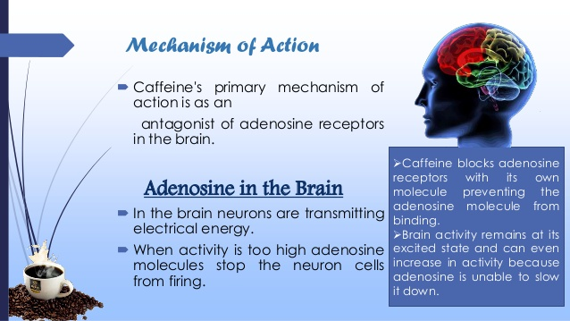 caffeine mechanism of action