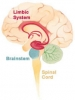 the parts of the brain that are affected