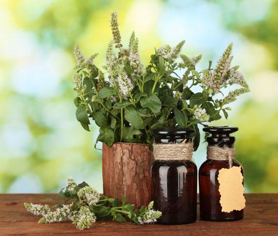 Herb Medicines